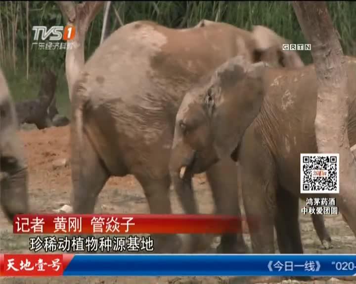 清远:24头非洲象进驻清远山区