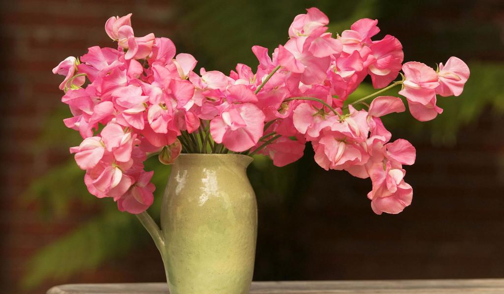 鲜花缺水?用它浸泡十秒钟就能恢复活力!