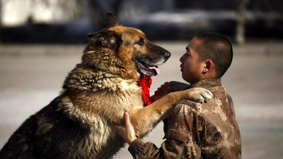 无言的战友——军犬