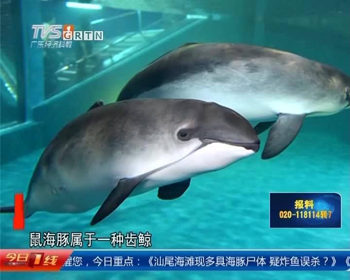 汕尾陆丰:海滩现多具海豚尸体 疑炸鱼误杀