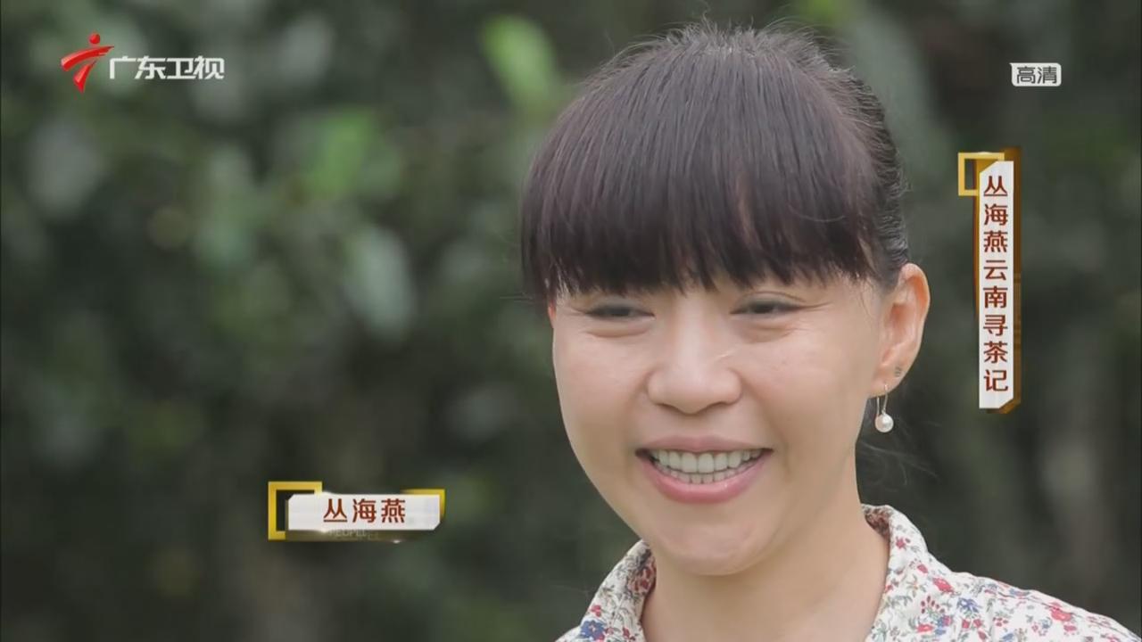 凡人大爱——丛海燕云南寻茶记