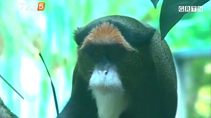 猴年看猴王 —— 金猴王国探秘
