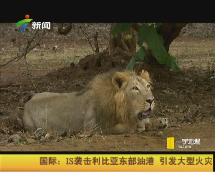 狂野印度——沙漠之狮