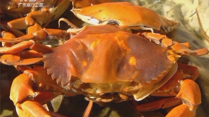 连壳都能吃的蟹你吃过没?