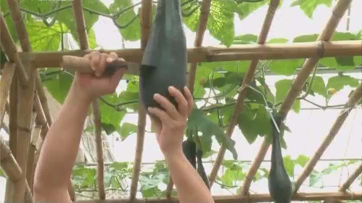 吃多少砍多少 这个瓜自带保鲜膜