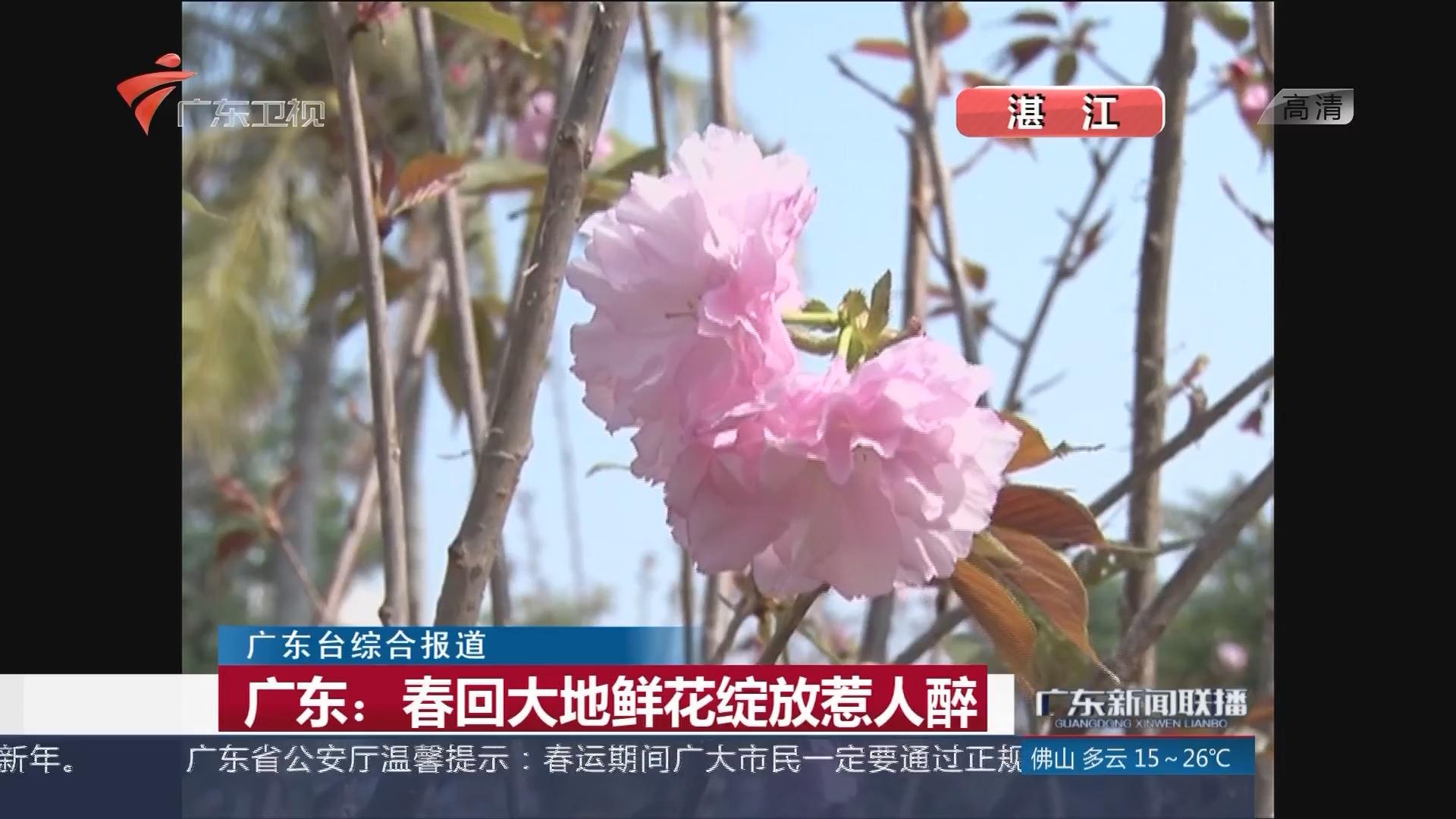 广东:春回大地鲜花绽放惹人醉