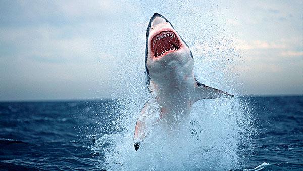 揭秘经典电影《大白鲨》