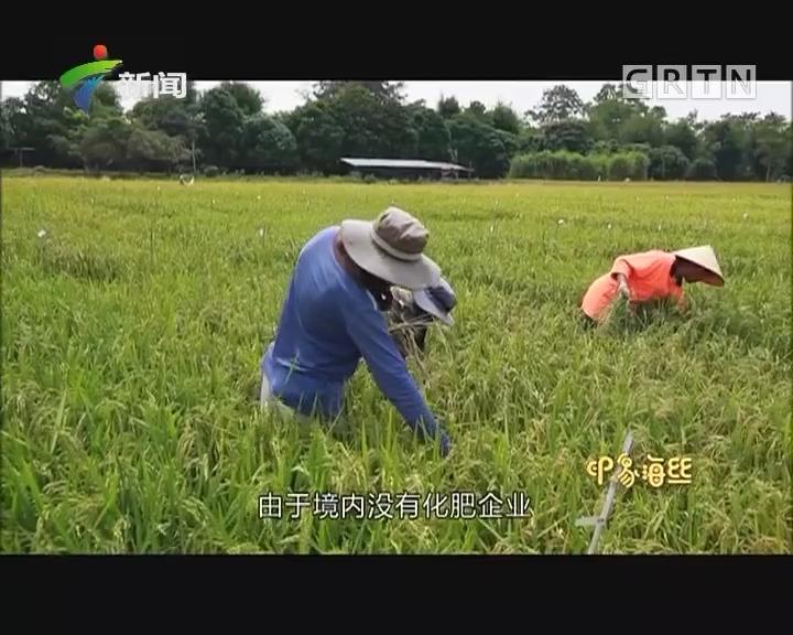 印象海丝 生息:稻花香