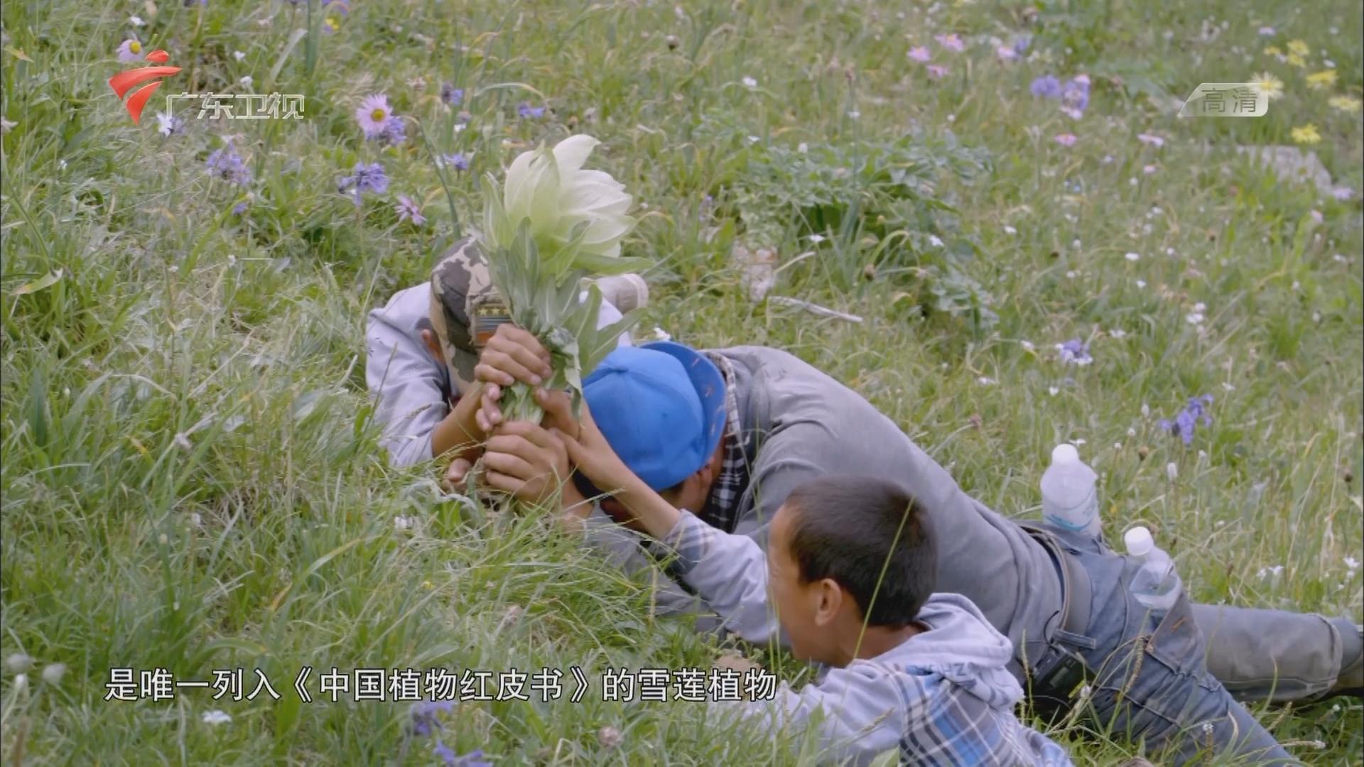 秘境神草:大地之恩