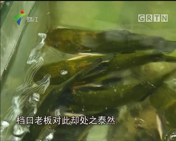 广州有水产品被检出含孔雀石绿