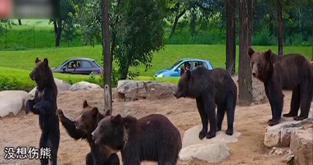 北京野生动物园游客下车砸熊?涉事车主回应:没有