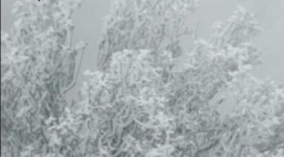 广东迎今冬第一场雪 市民御寒有高招