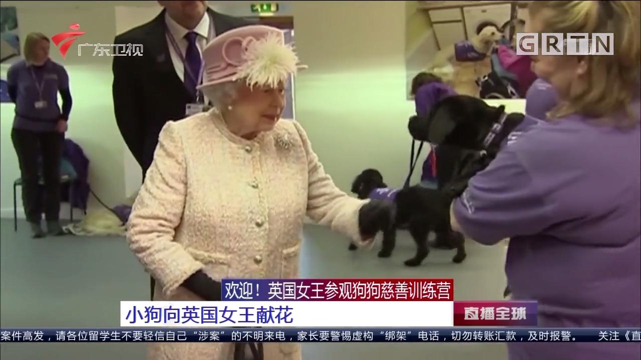 欢迎! 英国女王参观狗狗慈善训练营:小狗向英国女王献花