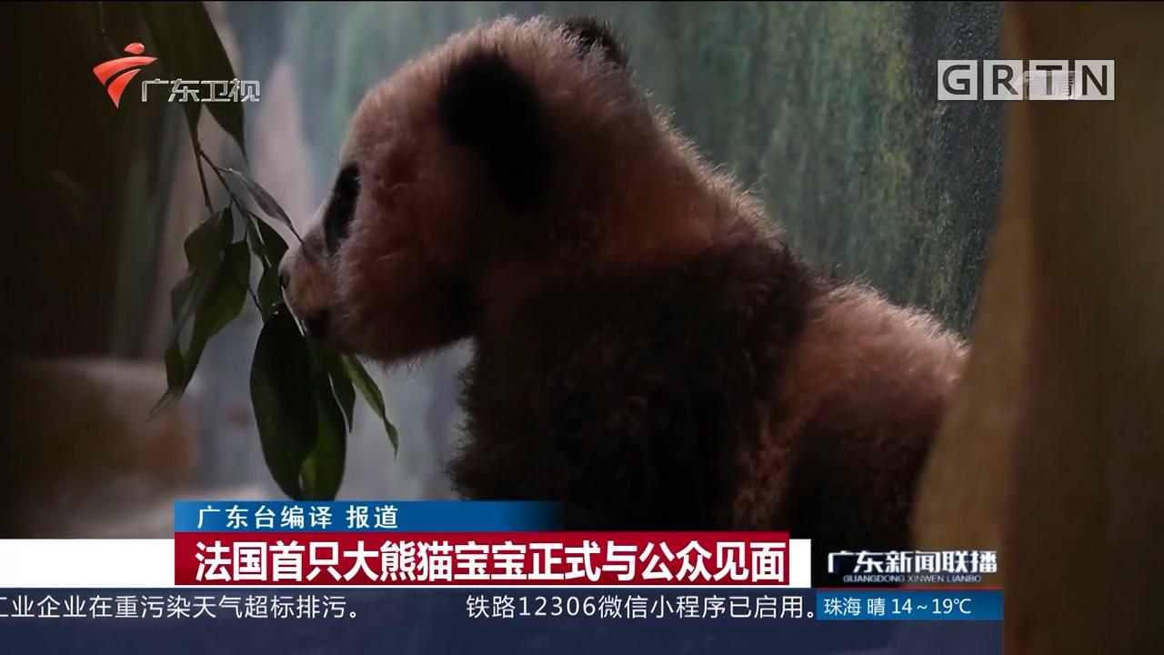 法国首只大熊猫宝宝正式与公众见面