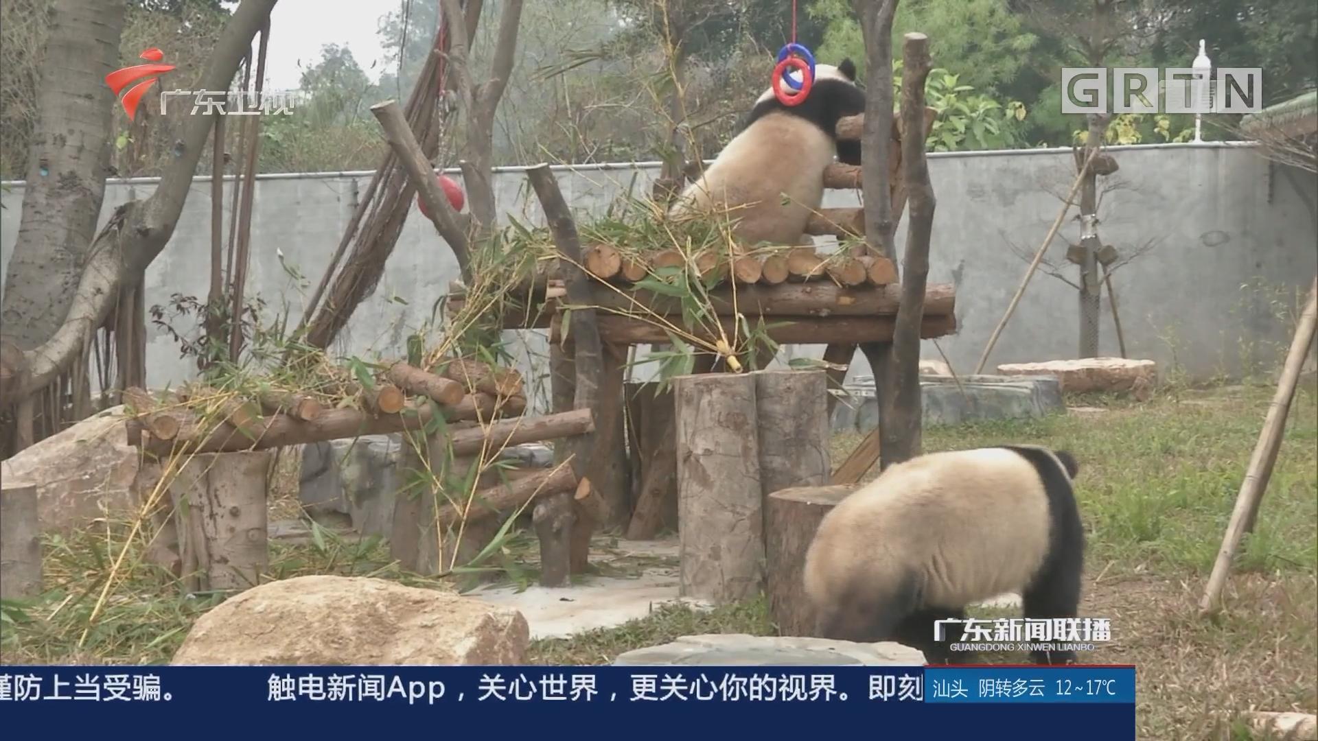 广州动物园大熊猫馆重新开放
