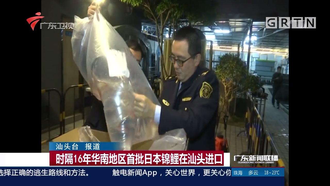 时隔16年华南地区首批日本锦鲤在汕头进口