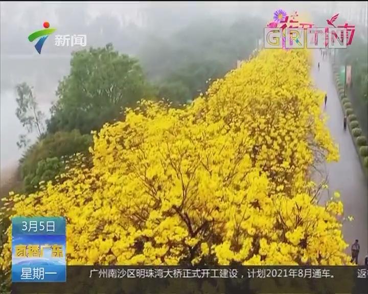 """佛山:广东最贵小区路""""黄金""""落满地"""