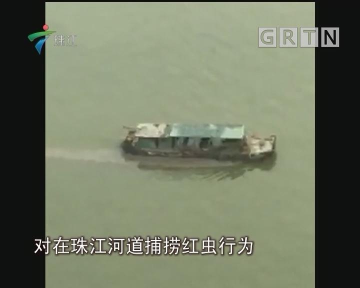 珠江有人偷排?渔政:实为捕红虫会巡查驱赶