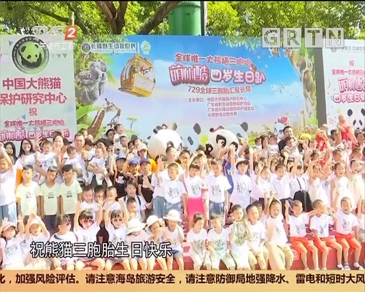 广州番禺:熊猫三胞胎四周岁 百组三胞胎家庭齐贺寿