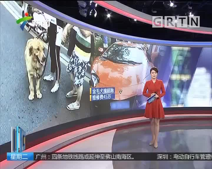 江苏:金毛犬撞上800万超跑兰博基尼