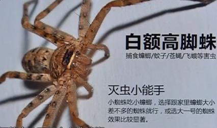 中山:嘴馋蟒蛇吃鸡 消防员及时捕获