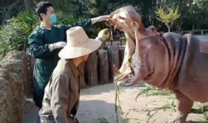 不文明游园行为:给河马投喂塑料袋 曝光不文明游园