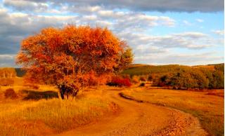 佛山秋祭 不一样的秋色