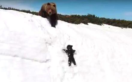 小熊跟随妈妈爬雪山 经历多次失败不放弃