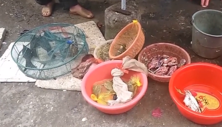 一线调查:阳江江城区 市场内民宅中摆卖候鸟 执法人员出动