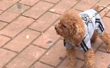 广州:公安推养犬登记电子证 足不出户领狗证