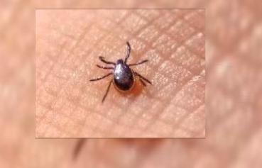 江门:男子被虫咬后重症入院 这种小虫要警惕