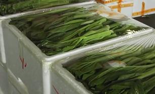 寒冬市场:寒潮来袭 蔬菜价格上涨