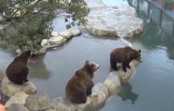 春節逛動物園 游客誤把手機喂棕熊