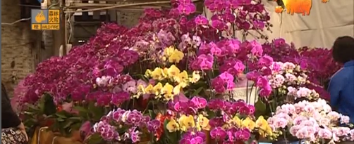临近春节 花卉市场人山人海