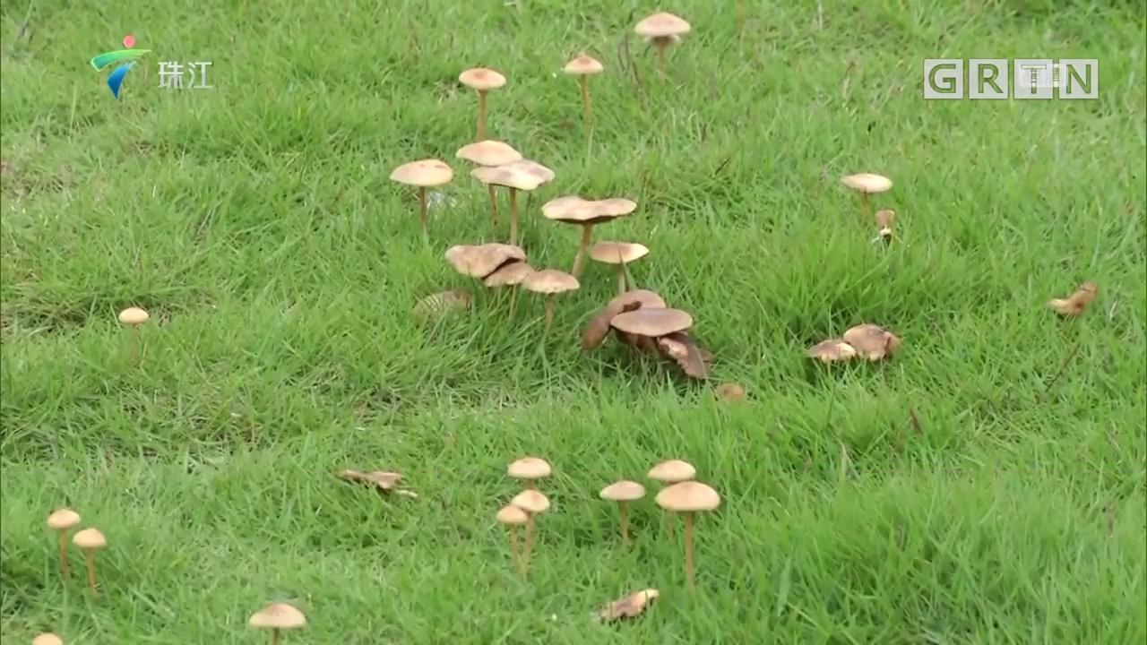 深圳:5天发生两起食用野蘑菇中毒事件