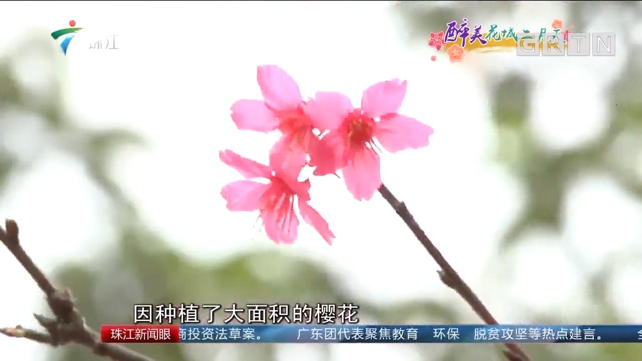 """广州:多彩二月天 寻找""""醉""""美赏花点"""
