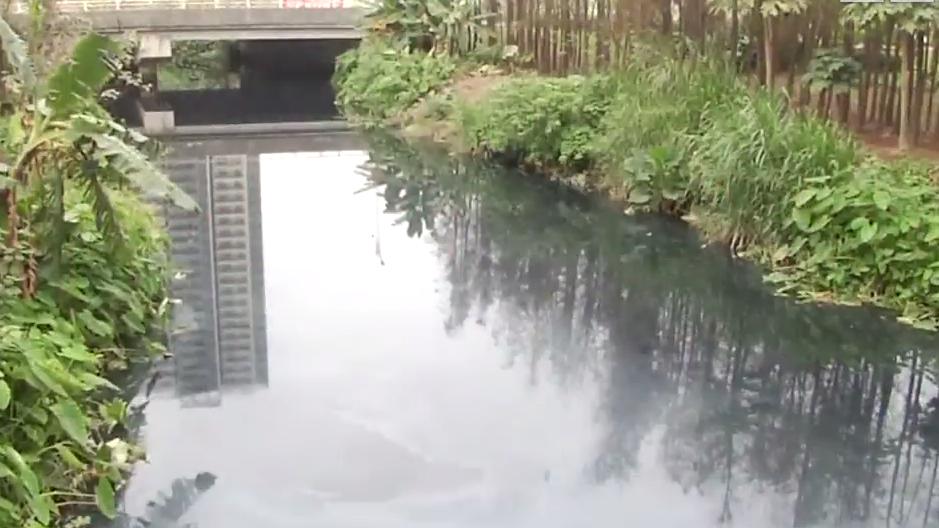 新会:河道发黑发臭多年 记者调查污染源