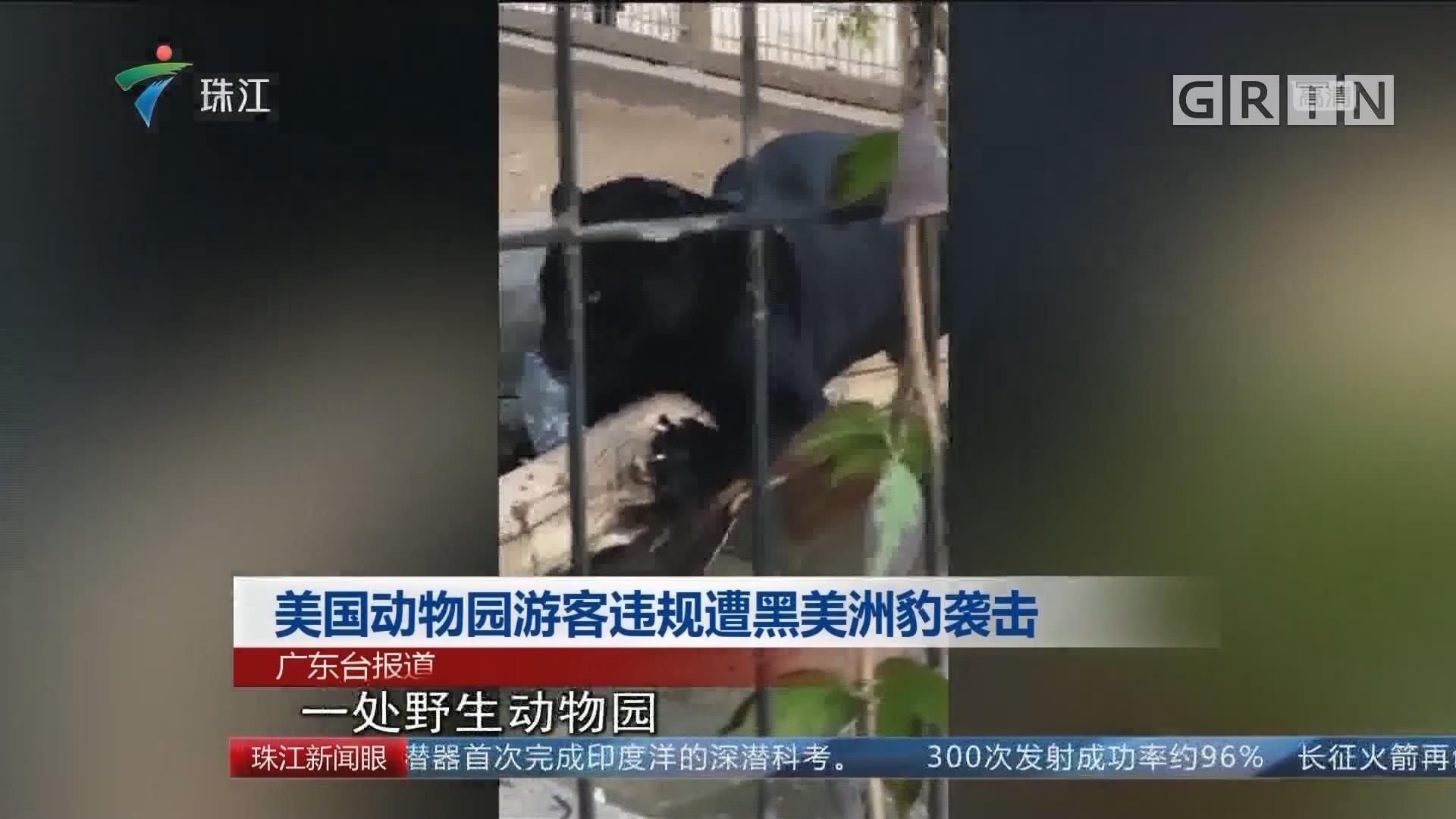 美国动物园游客违规遭黑美洲豹袭击