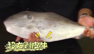 [2019-03-27]我爱返寻味:白灼深海鱿鱼