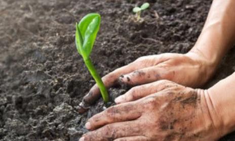 植树节:今年manbetx手机版 - 登陆已有1500多万人次植树