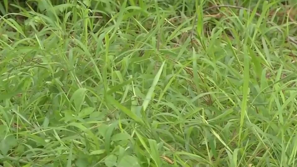 春季防蛇:男童被毒蛇咬伤 拍下毒蛇抢得救治时间