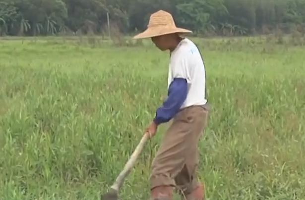 遂溪:灌溉渠被污染 几百亩良田丢荒
