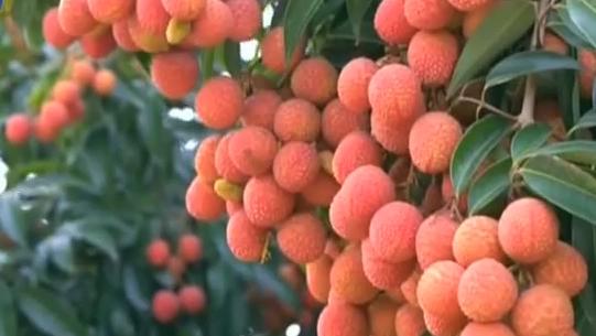 蔬菜短期供应不足 菜价普遍上涨一倍