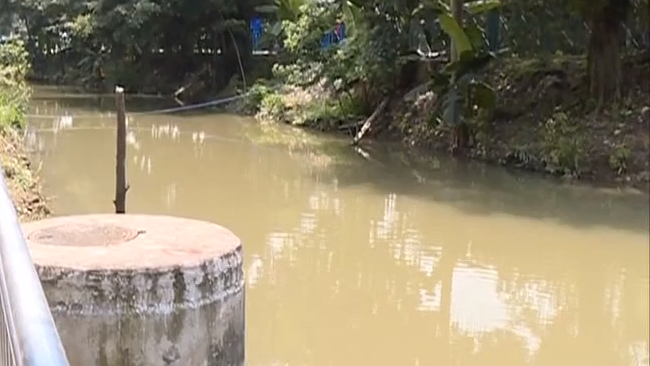 番禺:两名狗主跌落河涌 女子幸得热心村民救助