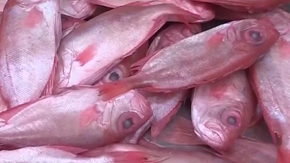 休渔期:渔获减少 鱼价上涨三成