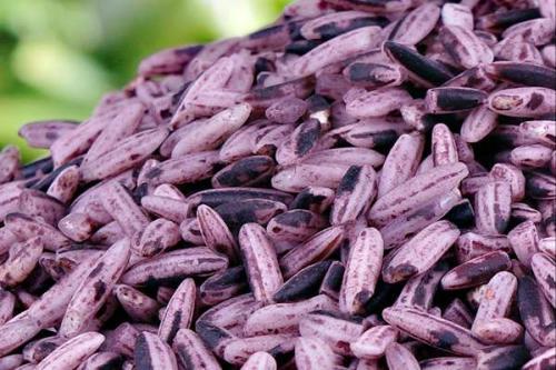 寻味·新兴紫米