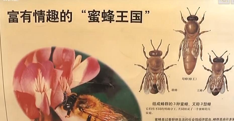 保护蜜蜂 从我们做起