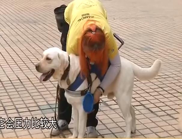 广州:省内唯一导盲犬基地被拆 谁给狗狗一个家?
