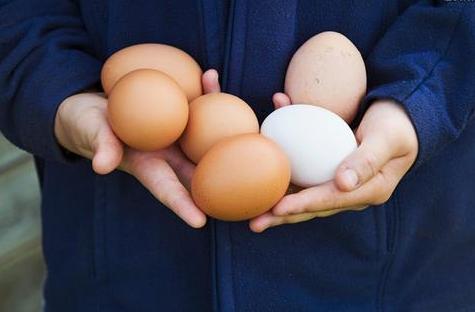 土鸡蛋vs笼养蛋 你会辨别吗?