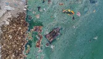 [HD][2019-06-23]今日一线:一线独家调查:湛江雷州 用死鸡死猪饲养塘鲺 这样的鱼能吃吗?